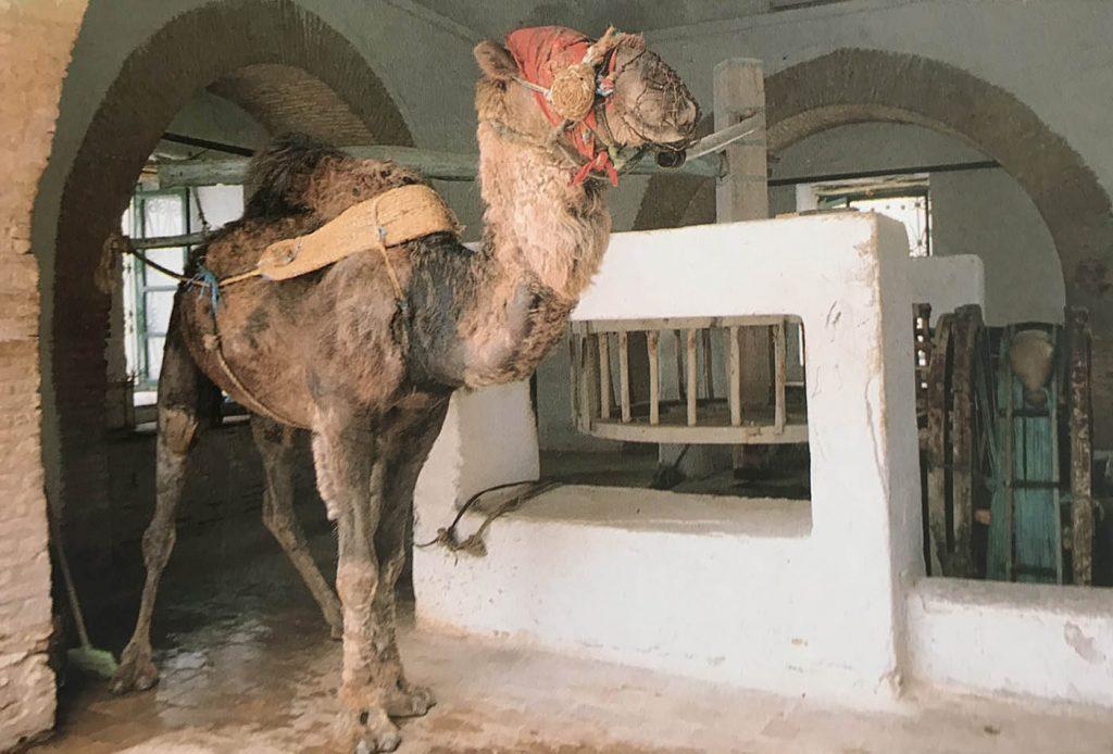Kayrevan'da geçmişten günümüze gelmiş deve ile su çekilen kuyu