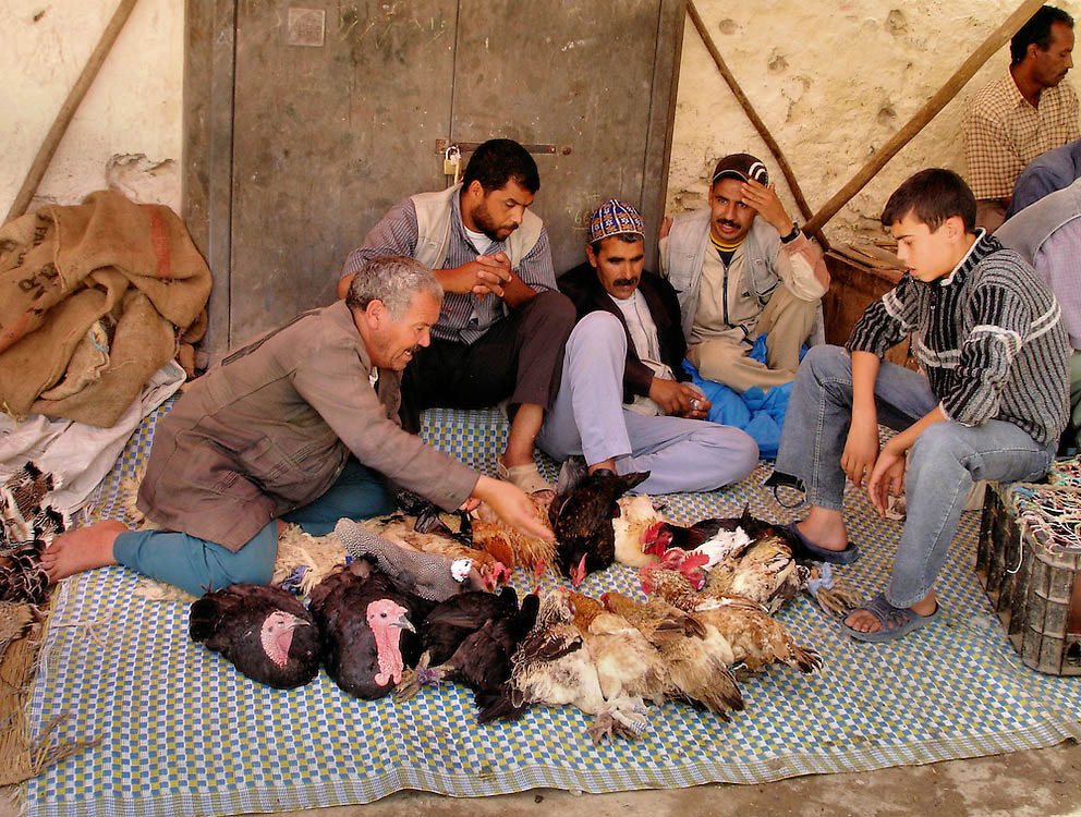 Fes el Bali'deki tavuk satanlar
