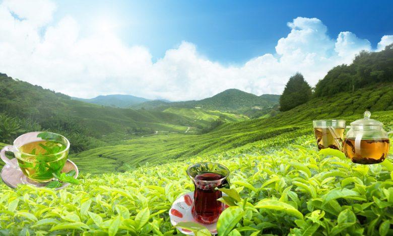 Çay ve Tea